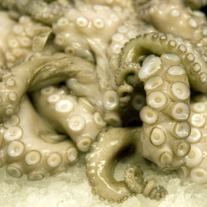 A twined mass of Octopus tentacles