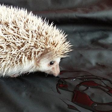 Diaries of a Hedgehog – Hot Stuff